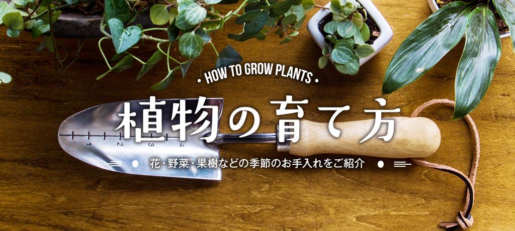 植物バナー