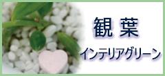 観葉・インテリアグリーン