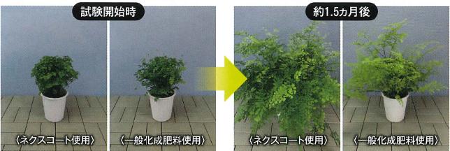 観葉成長の変化 ネクスコート